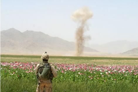 https://alterinformation.files.wordpress.com/2013/12/us-soldier-poppyfield.png
